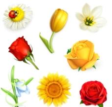 美丽逼真花卉图片
