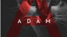 非衬线字体利落干净adam英文字体
