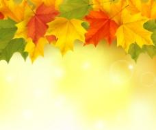 金秋枫叶背景图片