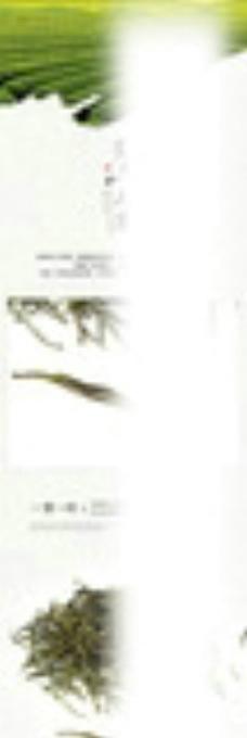 毛峰茶叶海报图片