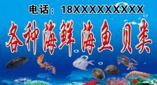 海鲜 海鱼 贝类