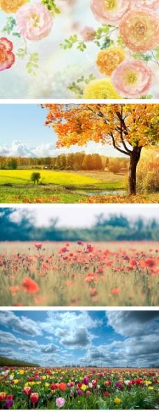 淘宝花朵全屏背景