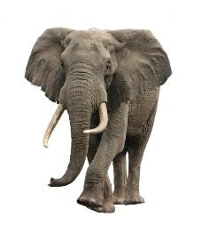 唯美大象图片