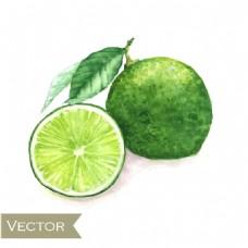 水彩绘绿色柠檬矢量素材