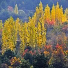 秋之风景图片