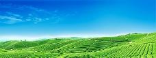 绿色农田风景海报