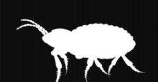 白色蚂蚁视频