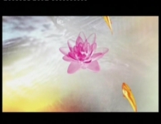 荷塘月色-水墨动画
