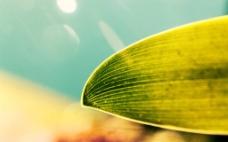 唯美绿色调叶子纹路背景高清图片壁纸