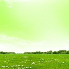 清新草原白色小花背景