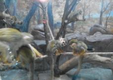 金丝猴图片