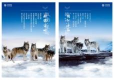 蓝色企业狼文化宣传海报展板