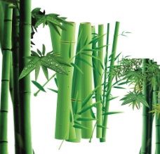 绿色竹子图片