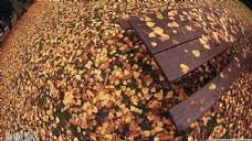 落叶 秋天
