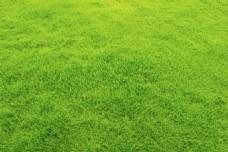 绿色草地草坪背景高清图片