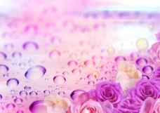 浪漫玫瑰花背景PSD分层素材