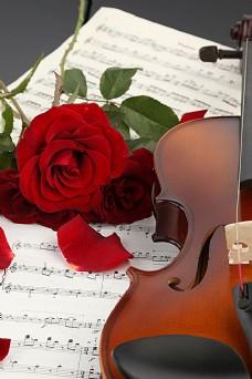 小提琴与火红玫瑰图片素材