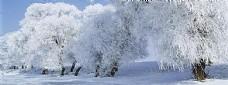 树林冬季雪花背景banner