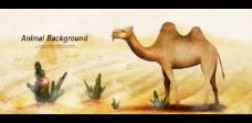 骆驼插画图片PSD素材