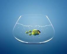 鱼缸里的大小鱼