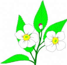 花朵 花草 鲜花 矢量 EPS格式_0009
