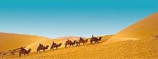 沙漠骆驼banne