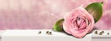 唯美玫瑰花背景图