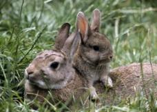 小兔子图片