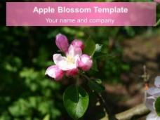 苹果花的背景模板