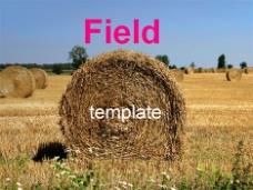 场和成捆的干草