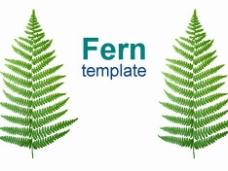 蕨类植物的自然模板