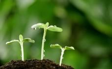 綠色新芽生長出土背景風景圖