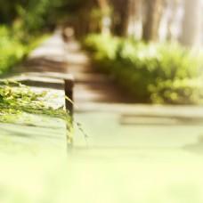 绿色梦幻小草背景