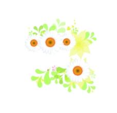 清新花朵菊花背景素材