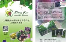 葡萄园传单图片