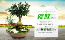 淘宝植物海报