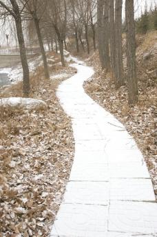 林间小径图片