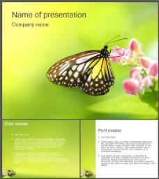 漂亮蝴蝶鲜花背景PPT模板