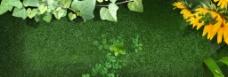 绿色草地花卉背景