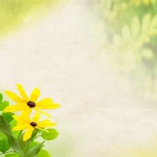 朦胧清新黄色小花背景