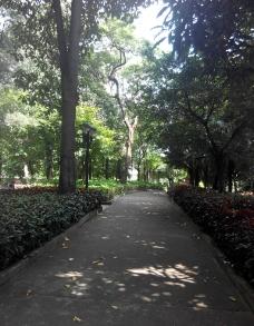 绿化园林图片