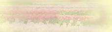 虚化花海-海报背景图片 (59)