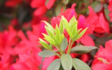 春花灿烂图片