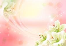 百合花背景