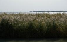 扎龙自然保护区风光图片