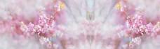 花朵banner