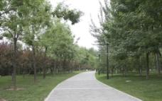 大望京公园图片