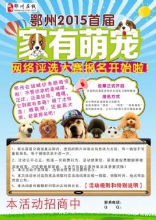 宠物海报素材