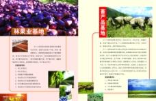 78团招商画册图片