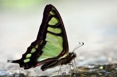 美丽的蝴蝶与梦幻背景高清图片